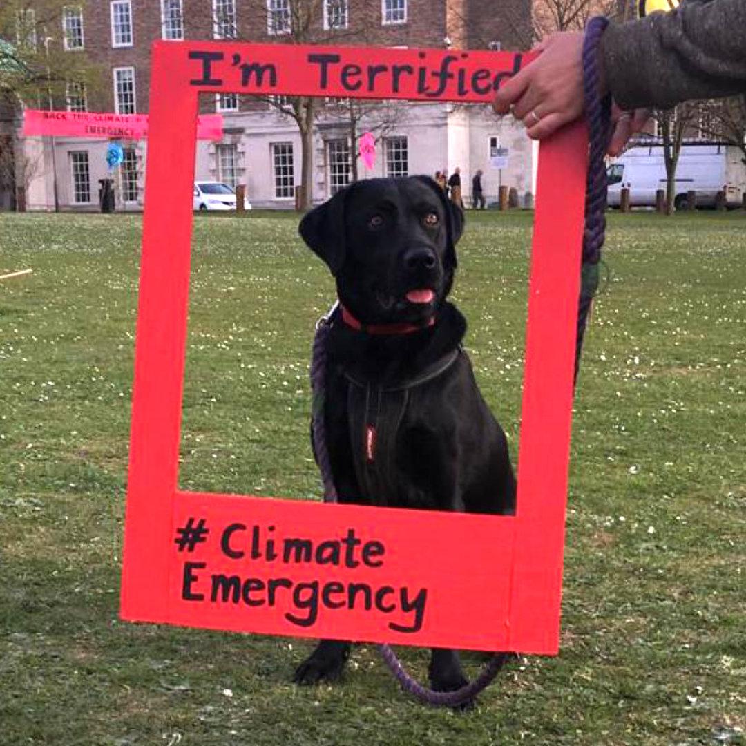 terriffied-dog1